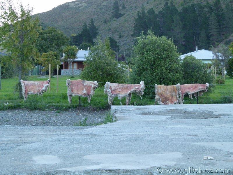 NZ_SI_2012_0461.JPG