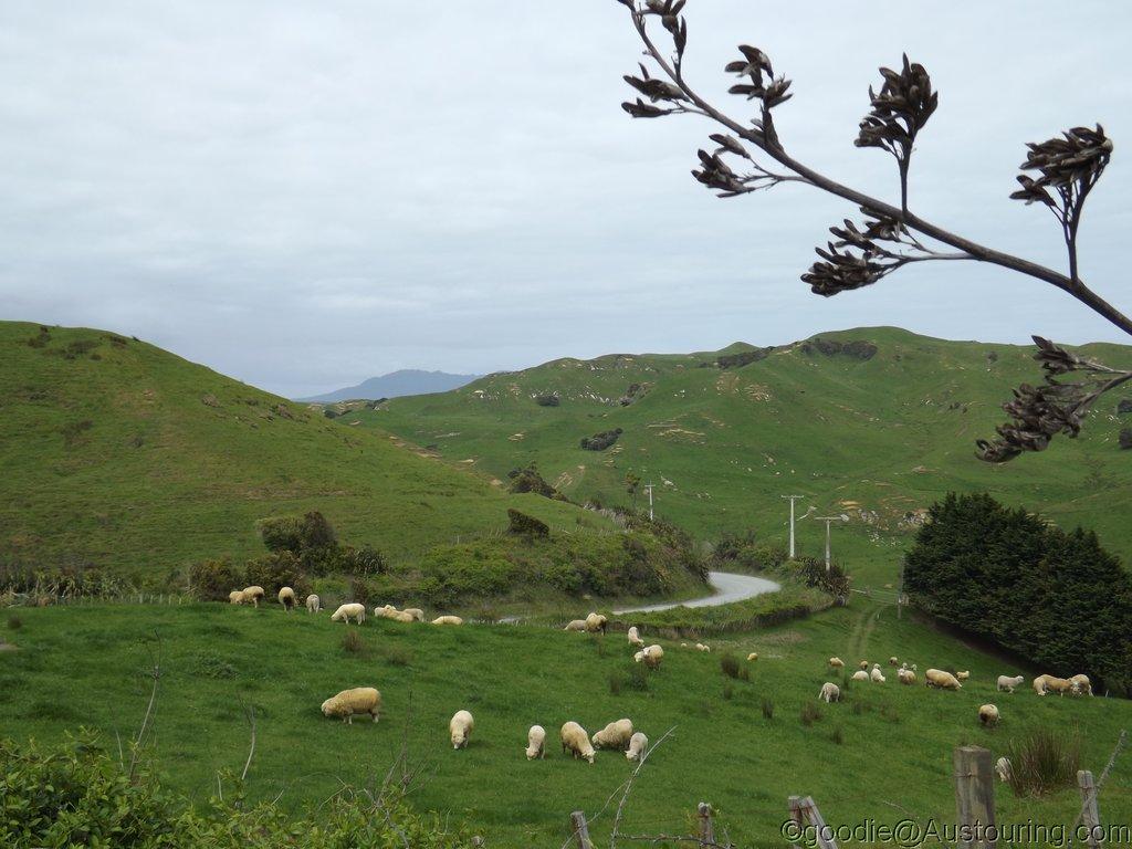 Mock_NZ14_006.JPG
