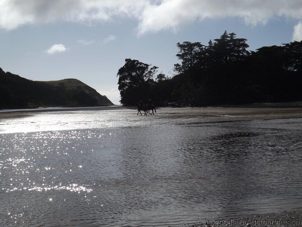 Mock_NZ14_068.JPG